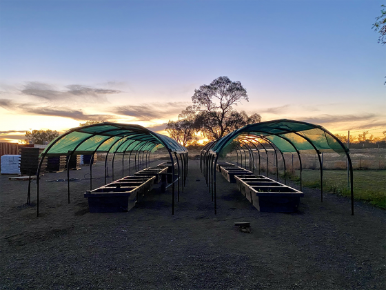 Sunset at the Walgett Garden